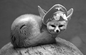 Wüstenfuchs Rommel
